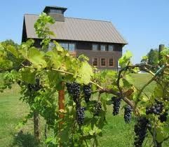 Shelburne Vineyards