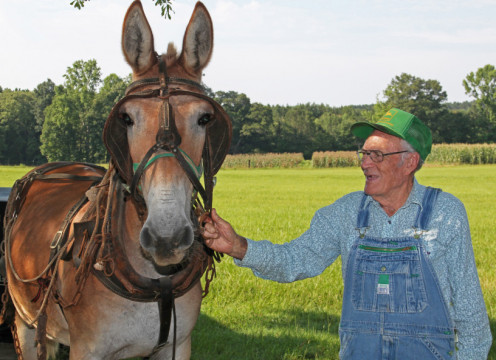 """Stanley Underwood, Fulton, Miss., and his friend, """"Hat,"""" his mule"""