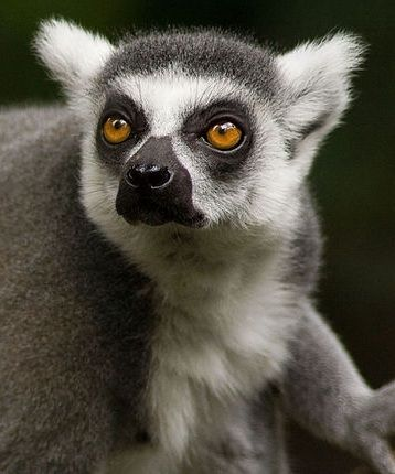 Henry Dooley Zoo