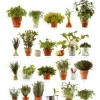Make your own Indoor garden