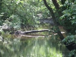 maryland tidal creek