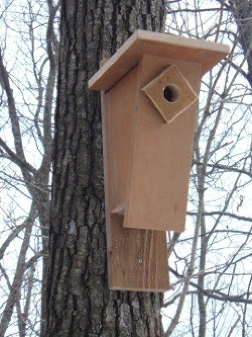 Peterson Bluebird House