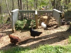 Our chickens help to aerate the compost piles