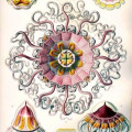 Ernst Haeckel and Art Forms in Nature