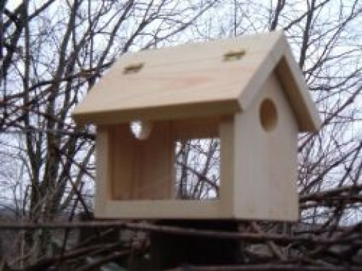 Specialty Bluebird Feeder