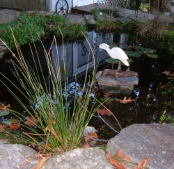 Getting the pond ready for winter