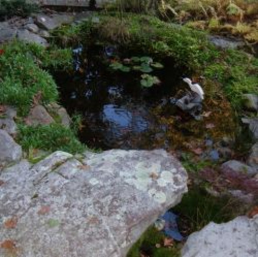 Winter Pond Care And Maintenance Tips Hubpages