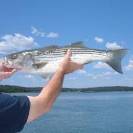 Striped bass drift fishing