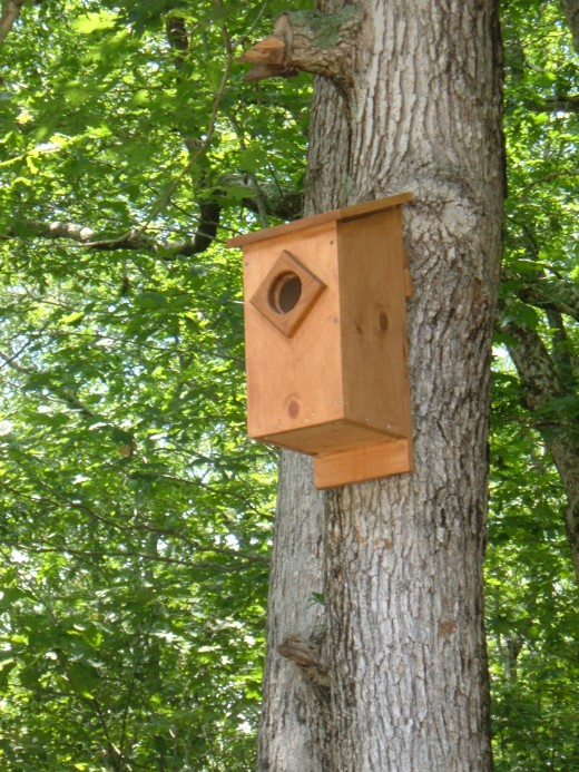 Nest Box for Rent