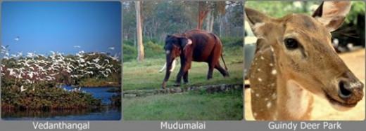 Wild Life of Tamil Nadu