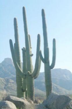 Edible Desert