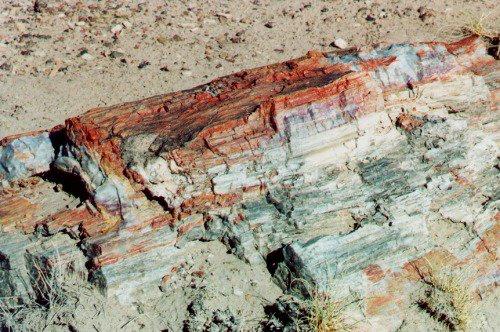 Closeup of a log.