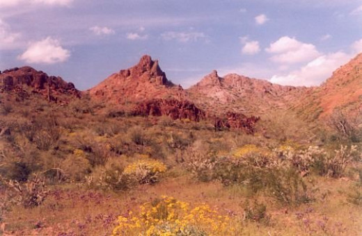 Brittlebush in the foreground, again.