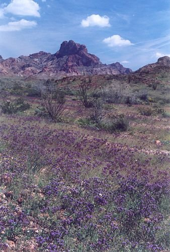 The purple flowers in the foreground are lupines.