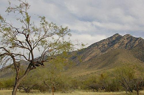 On the road between Tucson and Kitt Peak.