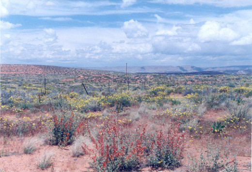 """""""Spring"""" flowers in Page (in August, actually). Scene from the parking lot of my motel toward the Vermilion Cliffs."""