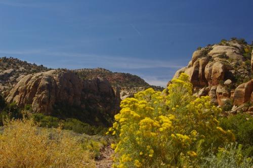 Canyonlands. Good August flowers.