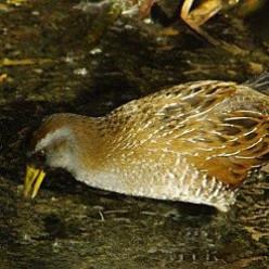 Birding - Another Quiet Adventure