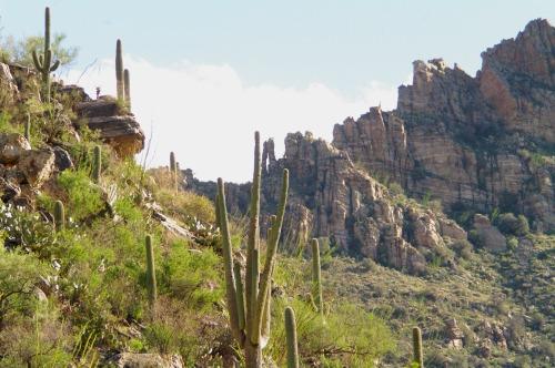 Rocks and saguaro cactus. Carnegiea gigantea.