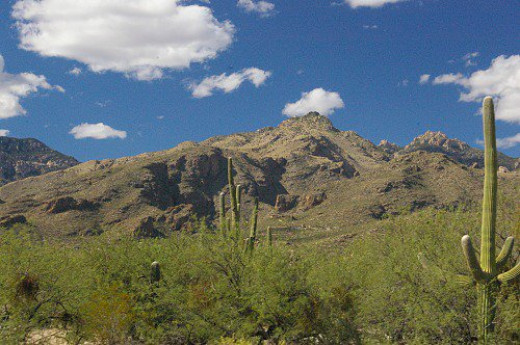 At the visitor's center: mountains, saguaros, trees, and clouds.