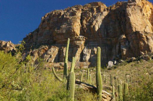 Saguaros and rocks.