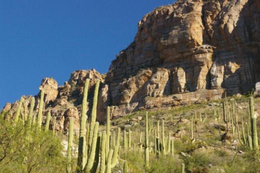 More saguaros and rocks.
