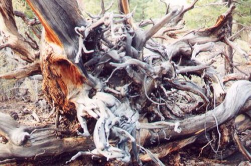 This is part of a twisted, dead tree.