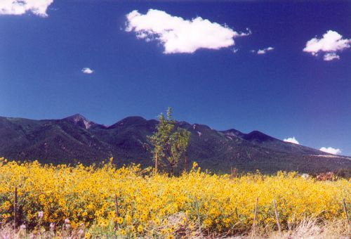 """This is a """"spring"""" photo taken in August. At higher elevations, it doesn't get warm enough for spring flowers until summer, and rain from Wet Summer is needed before they will bloom. This is a field of Sunflowers."""