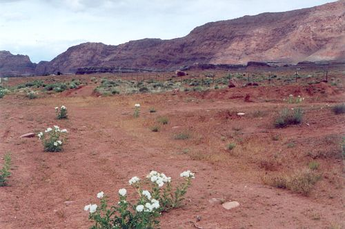 Soon after the turnoff onto US89A. The flowers are Desert Poppies.