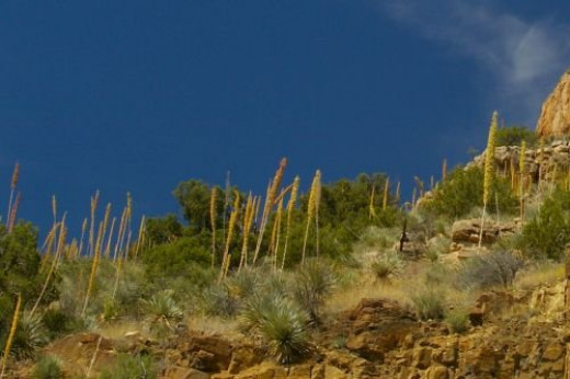 Closeup of that cliff so you can see the Beargrass on the hill.