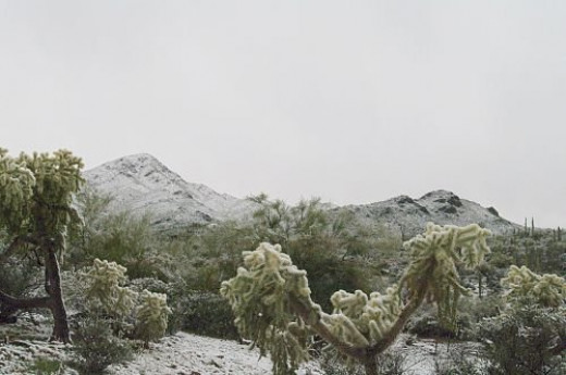 Wasson Peak with Cholla in the foreground.