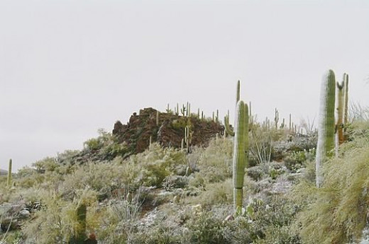 Saguaros with rocks in the background.