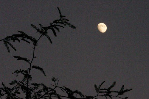 Moon with tree.
