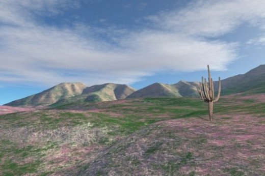 Spring in the Sonoran Desert - Wildflowers aren't easy to simulate in Terragen