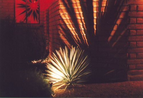 From several years ago, a simple display involving just one spotlight, casting a shadow from the agave in front.