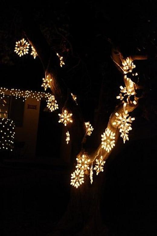Fancy stars along tree trunks.