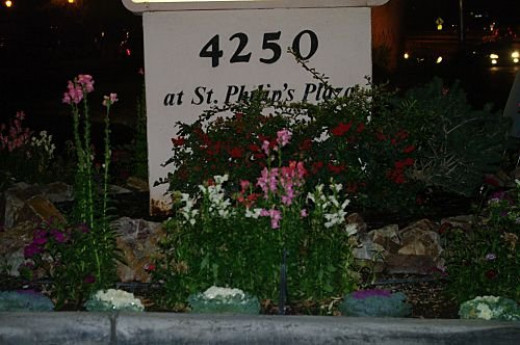 Where else would you find a flower garden blooming outside in winter, but southern Arizona?