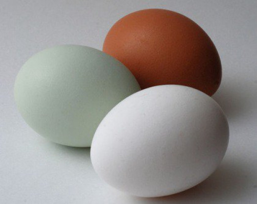 Araucana egg with two conventional eggs. They all taste the same.