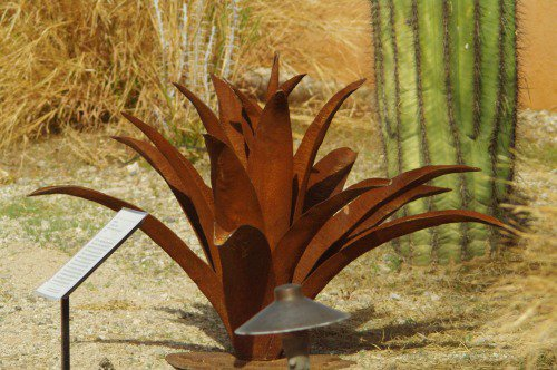 Rusty agave sculpture.