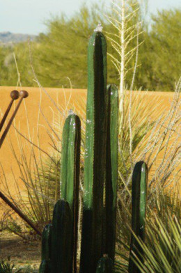 Bubbling cactus fountain.