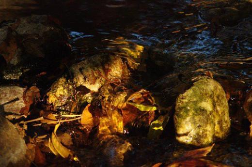 A little babbling brook in deep shade.