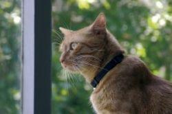 Mog spent the afternoon watching squirrels raid the birdfeeder.