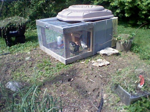 My chicken tractor from freecycle with improvised roof
