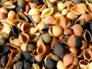 Colorful shell pasta for the cheapest recipes