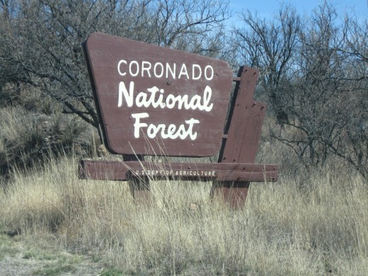 The Coronado National Forest Stretches over wide areas of Southern Arizona and is a great area for hiking, horseback riding, camping and just plain driving through.