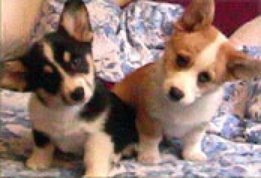 pups at 6 weeks old.