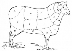 Diagram for how to sheer a sheep. The Graphics Fairy.