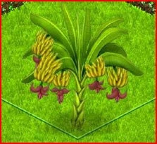 Country Life Banana Tree with Fully Grown Bananas