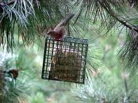 Suet feeder cage