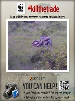 Zebra mom with foal Tembe